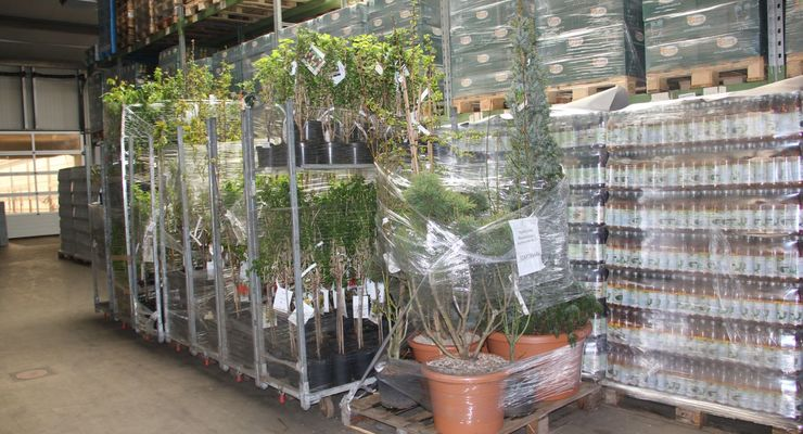 Grüßing Spedition, Pflanzenlogistik, Westerstede