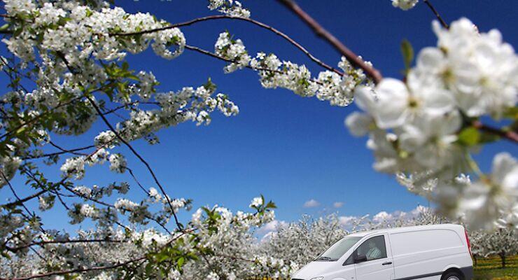 Pollen, Transporter, Frühjahr, Allergien